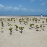 trash the dress playa del carmen rivera maya