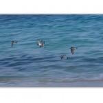 abstract photography, aves vuelo, fine art, fotografia interiorismo, fotografia de arte, nature photography, beach & tropical pictures,